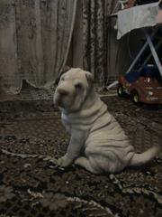 щенок шарпея