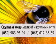 Покупаем мед (закупка пчелиного меда) крупным и мелким оптом в Полтаве